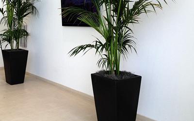 concrete vase planters